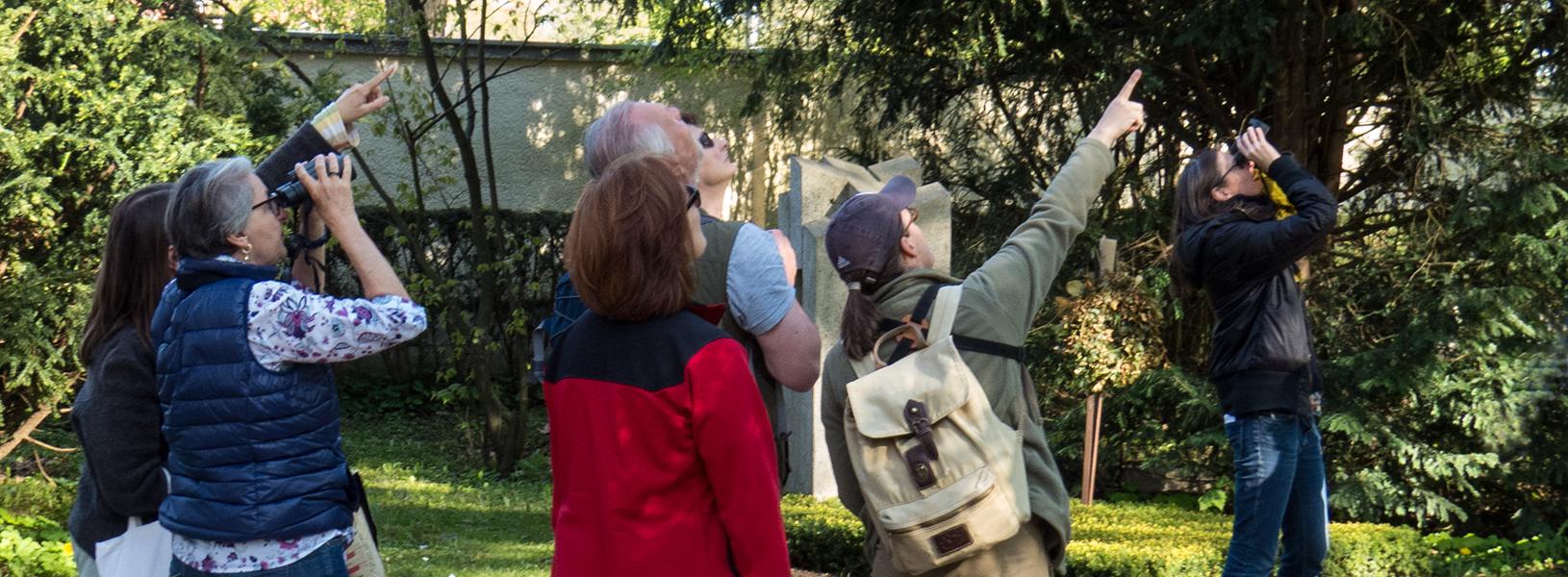 Birding Workshops & Bird Walks