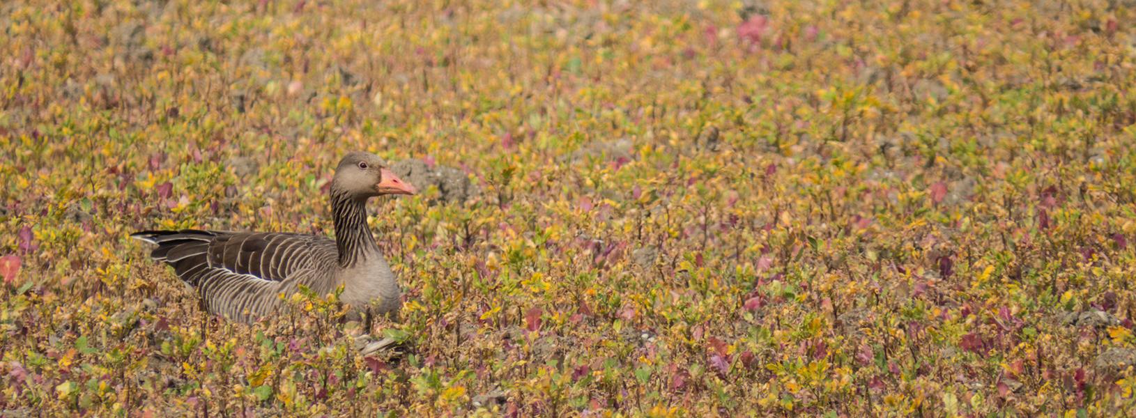 Vogelwildes - Verschiedenes rund um Wildvögel
