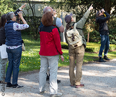Birding workshops & guided tours: Guided tour
