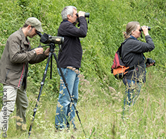 Birding workshops & guided tours: Birding with friends