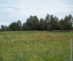 Birding sites - Flowering meadow