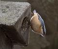 Vogelwildes - Nisthilfen